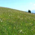 Dražba - Trvale trávne porasty v Hriňovej