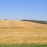 Dražba - Trvalé trávne porasty v Kozárovciach